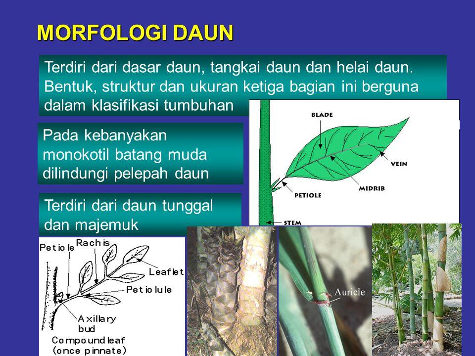 MORFOLOGI DAUN Terdiri dari dasar daun, tangkai daun dan helai daun. Bentuk, struktur dan ukuran ketiga bagian ini berguna dalam klasifikasi tumbuhan