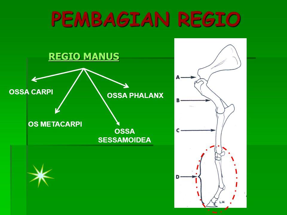 PEMBAGIAN REGIO REGIO MANUS REGIO MANUS OSSA CARPI OS METACARPI OSSA PHALANX OSSA SESSAMOIDEA
