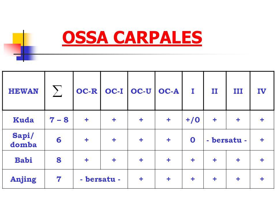 OSSA CARPALES HEWANOC-ROC-IOC-UOC-AIIIIIIIV Kuda7 – 8+++++/0+++ Sapi/ domba 6++++0- bersatu -+ Babi8++++++++ Anjing7- bersatu -++++++