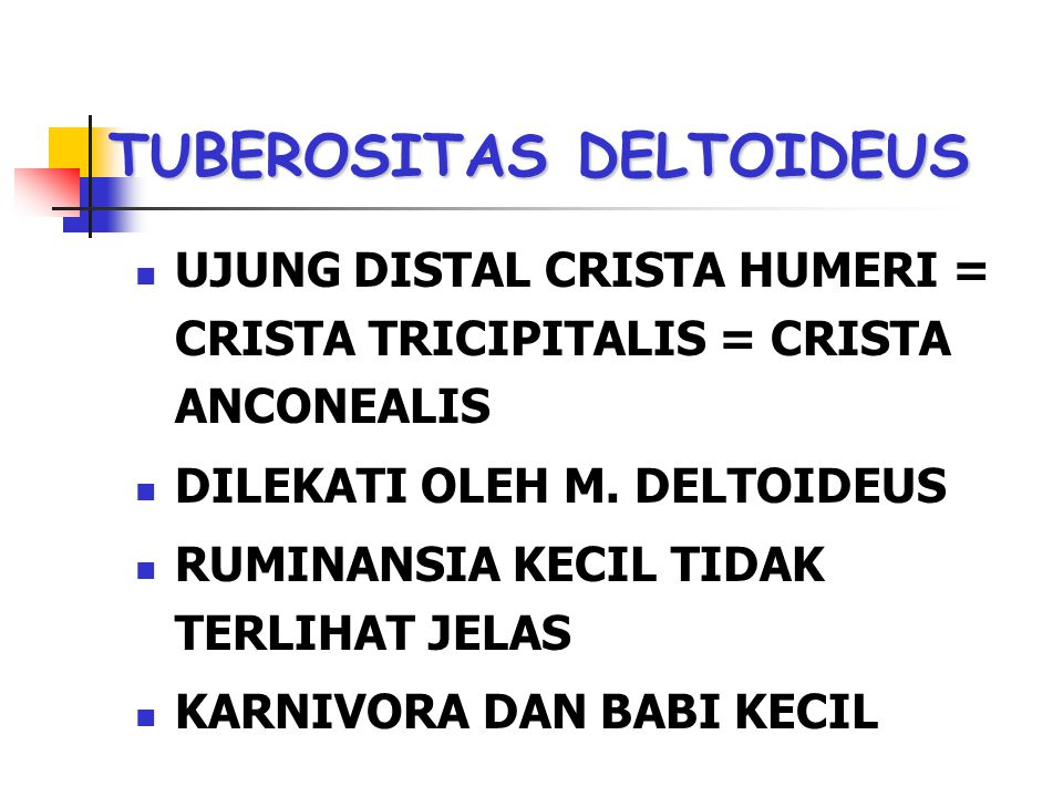TUBEROSITAS DELTOIDEUS UJUNG DISTAL CRISTA HUMERI = CRISTA TRICIPITALIS = CRISTA ANCONEALIS DILEKATI OLEH M. DELTOIDEUS RUMINANSIA KECIL TIDAK TERLIHA