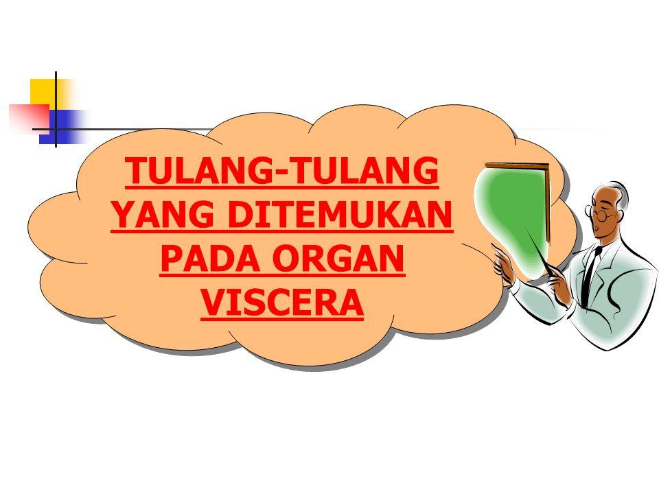 TULANG-TULANG YANG DITEMUKAN PADA ORGAN VISCERA TULANG-TULANG YANG DITEMUKAN PADA ORGAN VISCERA