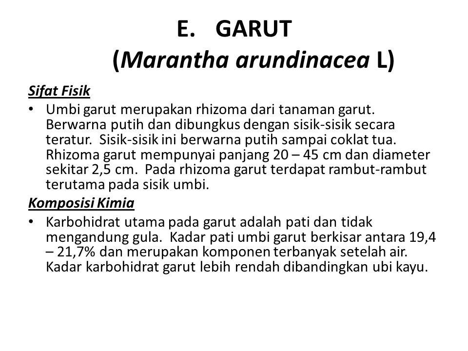 E.GARUT (Marantha arundinacea L) Sifat Fisik Umbi garut merupakan rhizoma dari tanaman garut. Berwarna putih dan dibungkus dengan sisik-sisik secara t