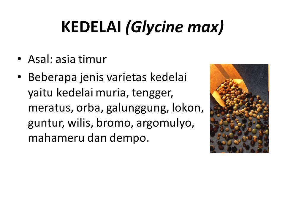KEDELAI (Glycine max) Asal: asia timur Beberapa jenis varietas kedelai yaitu kedelai muria, tengger, meratus, orba, galunggung, lokon, guntur, wilis,