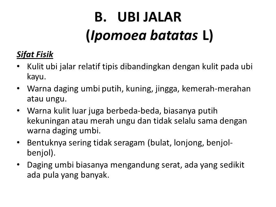 B.UBI JALAR (Ipomoea batatas L) Sifat Fisik Kulit ubi jalar relatif tipis dibandingkan dengan kulit pada ubi kayu. Warna daging umbi putih, kuning, ji