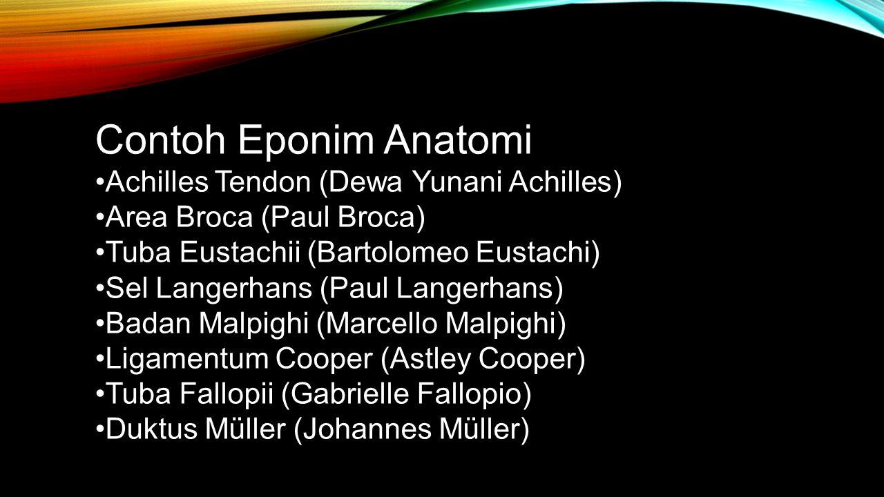 Contoh Eponim Anatomi Achilles Tendon (Dewa Yunani Achilles) Area Broca (Paul Broca) Tuba Eustachii (Bartolomeo Eustachi) Sel Langerhans (Paul Langerh