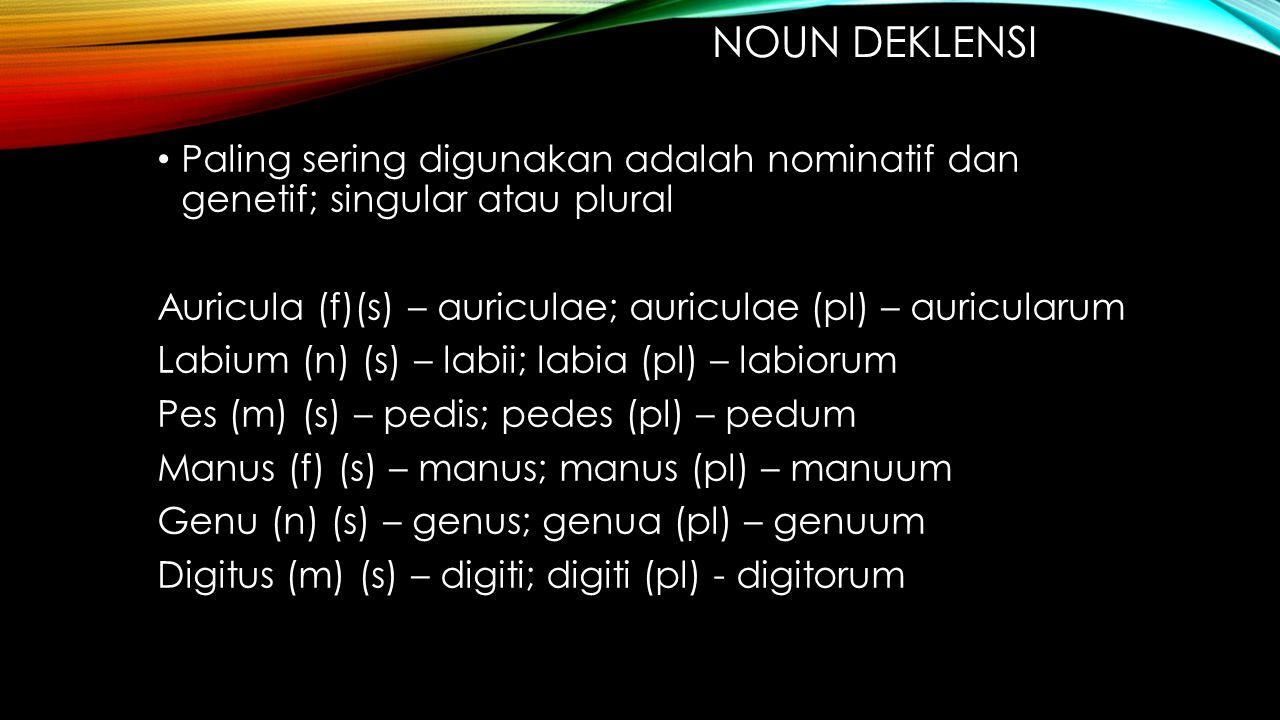 NOUN DEKLENSI Paling sering digunakan adalah nominatif dan genetif; singular atau plural Auricula (f)(s) – auriculae; auriculae (pl) – auricularum Lab