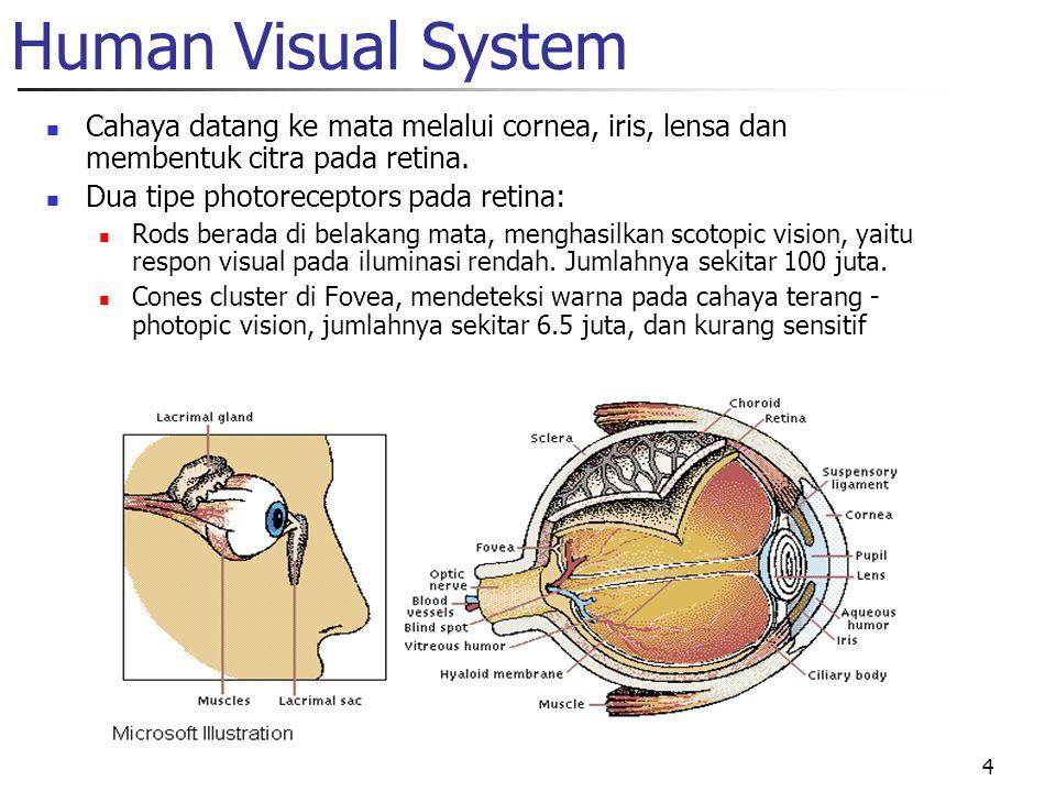 4 Human Visual System Cahaya datang ke mata melalui cornea, iris, lensa dan membentuk citra pada retina. Dua tipe photoreceptors pada retina: Rods ber