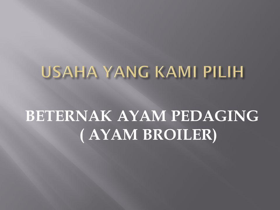 BETERNAK AYAM PEDAGING ( AYAM BROILER)