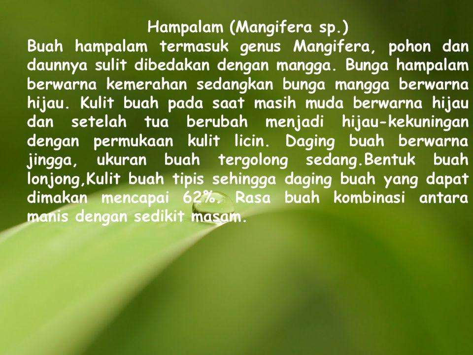 Hampalam (Mangifera sp.) Buah hampalam termasuk genus Mangifera, pohon dan daunnya sulit dibedakan dengan mangga. Bunga hampalam berwarna kemerahan se