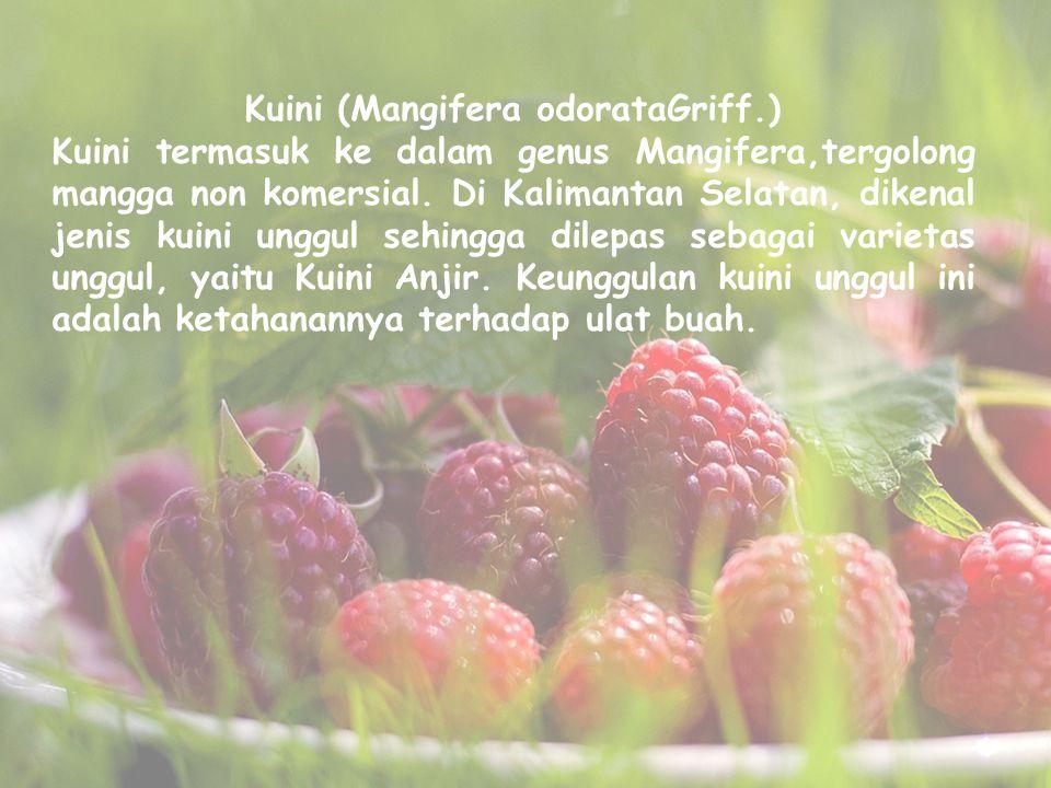 Kuini (Mangifera odorataGriff.) Kuini termasuk ke dalam genus Mangifera,tergolong mangga non komersial. Di Kalimantan Selatan, dikenal jenis kuini ung