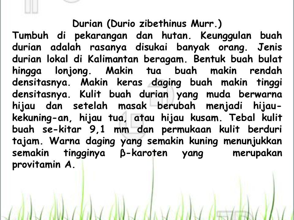 Durian (Durio zibethinus Murr.) Tumbuh di pekarangan dan hutan. Keunggulan buah durian adalah rasanya disukai banyak orang. Jenis durian lokal di Kali