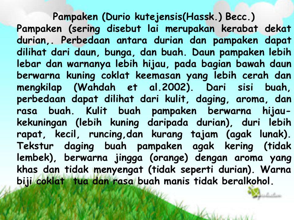 Pampaken (Durio kutejensis(Hassk.) Becc.) Pampaken (sering disebut lai merupakan kerabat dekat durian,. Perbedaan antara durian dan pampaken dapat dil
