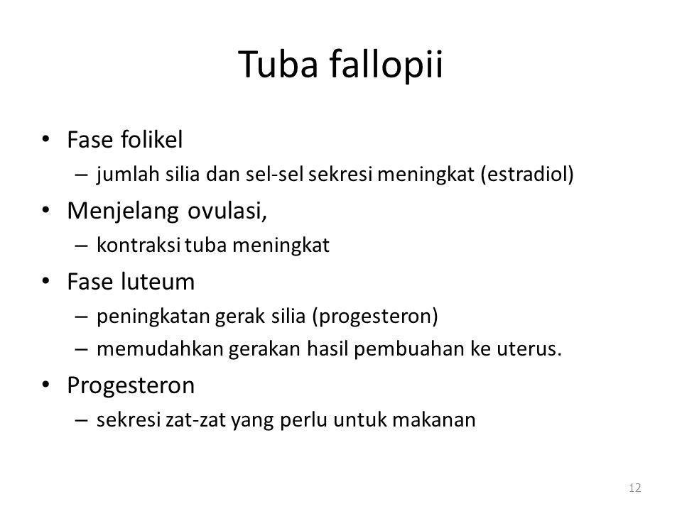 Tuba fallopii Fase folikel – jumlah silia dan sel-sel sekresi meningkat (estradiol) Menjelang ovulasi, – kontraksi tuba meningkat Fase luteum – pening