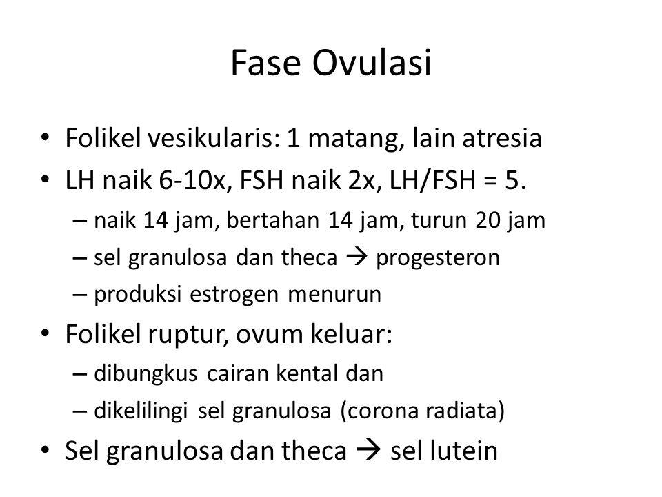Fase Ovulasi Folikel vesikularis: 1 matang, lain atresia LH naik 6-10x, FSH naik 2x, LH/FSH = 5. – naik 14 jam, bertahan 14 jam, turun 20 jam – sel gr