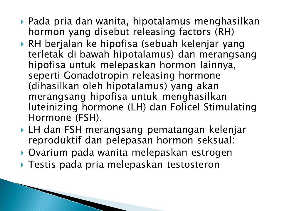 Pada pria dan wanita, hipotalamus menghasilkan hormon yang disebut releasing factors (RH)  RH berjalan ke hipofisa (sebuah kelenjar yang terletak d