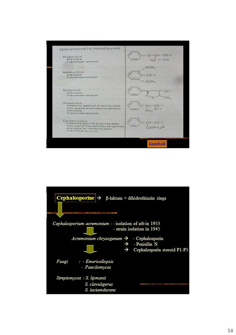 Cephalosporine  β-laktam + dihidrothiazin rings Cephalosporium acremonium : - isolation of atb in 1953 - strain isolation in 1945 Acremonium chrysogenum  - Cephalosporin  - Penisilin N  Cephalosporin steroid P1-P5 Fungi: - Emericellopsis - Paecilomyces Streptomyces : S.
