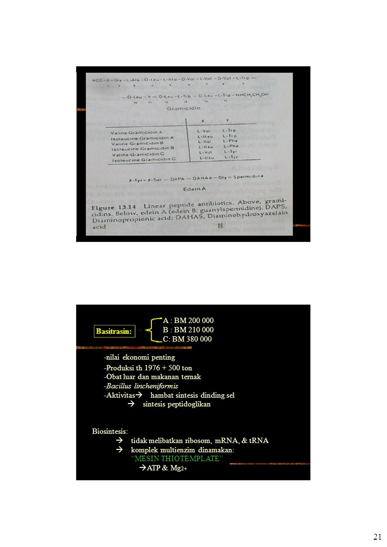 Basitrasin: A : BM 200 000 B : BM 210 000 C: BM 380 000 -nilai ekonomi penting -Produksi th 1976 + 500 ton -Obat luar dan makanan ternak -Bacillus lincheniformis -Aktivitas  hambat sintesis dinding sel  sintesis peptidoglikan Biosintesis:  tidak melibatkan ribosom, mRNA, & tRNA  komplek multienzim dinamakan: MESIN THIOTEMPLATE  ATP & Mg 2+ 21