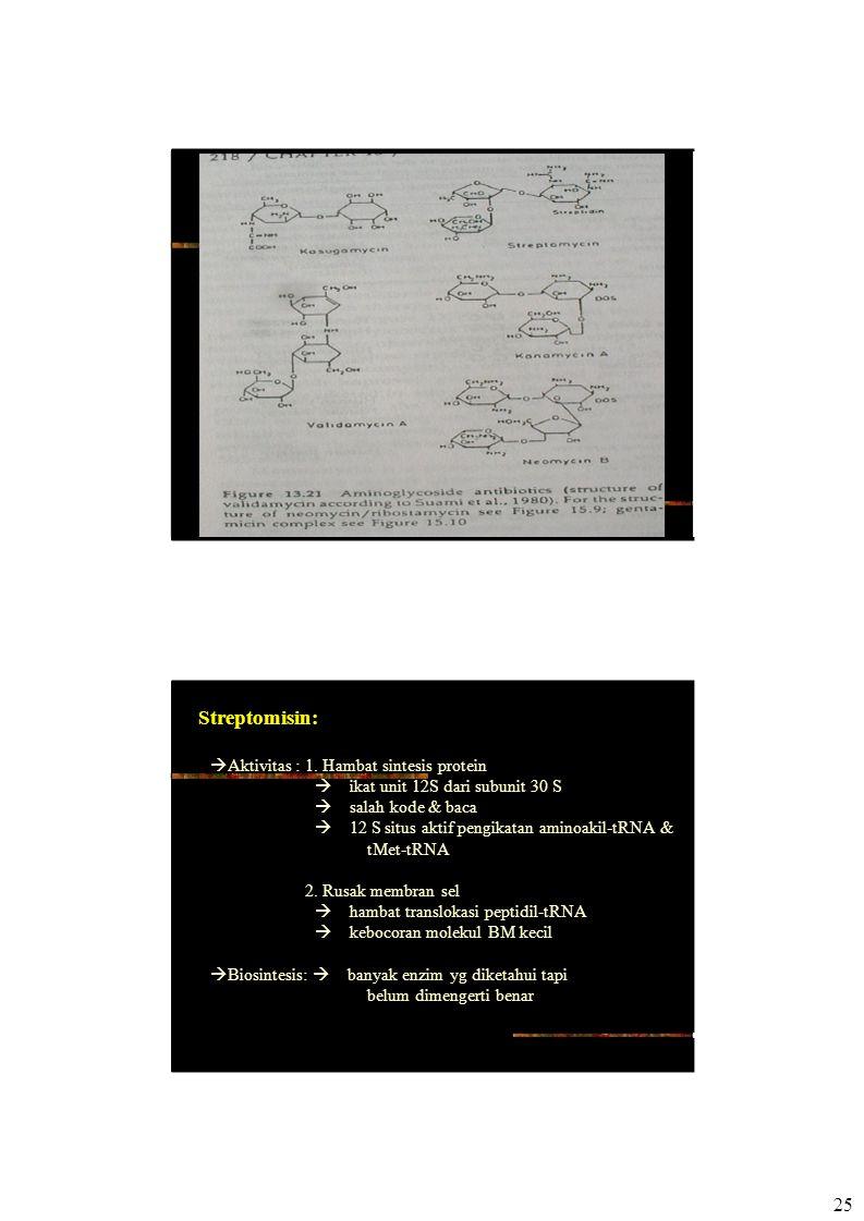 25 Streptomisin:  Aktivitas : 1. Hambat sintesis protein  ikat unit 12S dari subunit 30 S  salah kode & baca  12 S situs aktif pengikatan amino