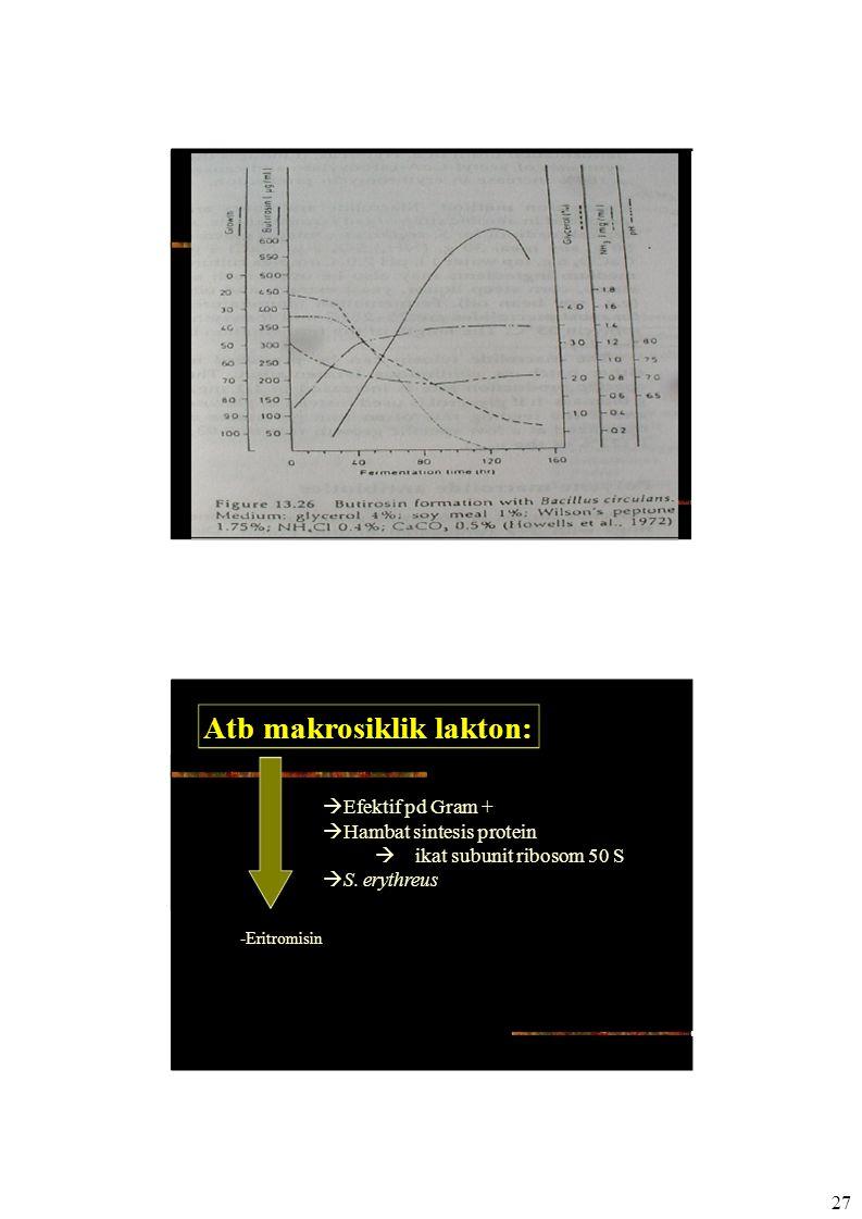27 Atb makrosiklik lakton:  Efektif pd Gram +  Hambat sintesis protein  ikat subunit ribosom 50 S  S. erythreus -Eritromisin