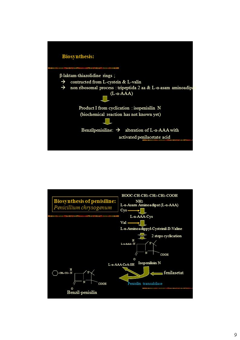Biosynthesis of penisilin:  affected by [fosfat]  repressed by glucose Fermentation use lactose  slow metabolisms of sugar Strain development: Production:  Fleming strain = 2 IU/ml  now = 85 000 IU/ml Peningkatan dari 0.0012 g/l  50 g/l Strain selection & mutagenesis program Starting in 1943 Method of production: Penisiline G & V  produced by submerged fermentation  capacity 40 000– 200 000 liters  aerobic  O 2 supply limitation 10