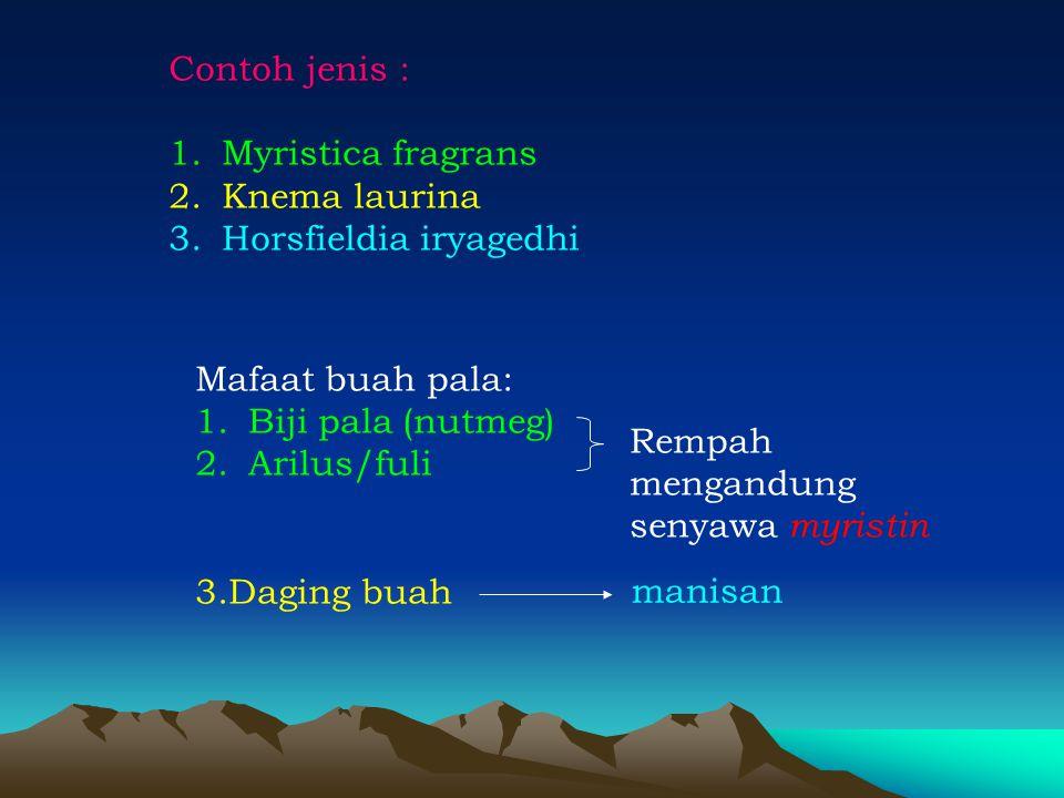 Contoh jenis : 1.Myristica fragrans 2.Knema laurina 3.Horsfieldia iryagedhi Mafaat buah pala: 1.Biji pala (nutmeg) 2.Arilus/fuli 3.Daging buah Rempah