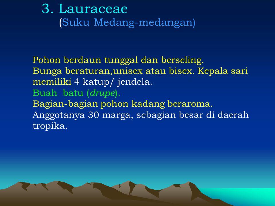 3. Lauraceae (Suku Medang-medangan) Pohon berdaun tunggal dan berseling. Bunga beraturan,unisex atau bisex. Kepala sari memiliki 4 katup/ jendela. Bua