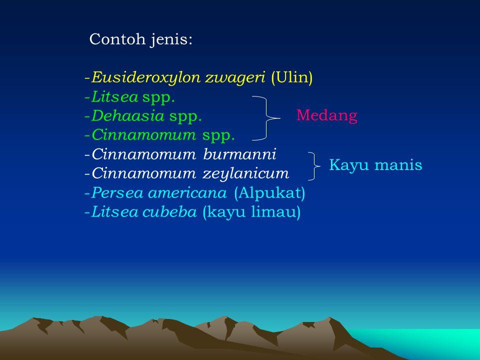 Contoh jenis: - Eusideroxylon zwageri (Ulin) - Litsea spp. - Dehaasia spp. - Cinnamomum spp. - Cinnamomum burmanni - Cinnamomum zeylanicum - Persea am