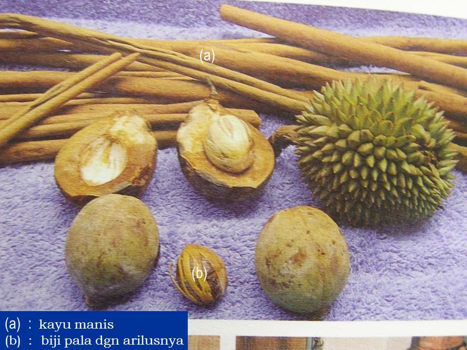 (a) (b) (a): kayu manis (b): biji pala dgn arilusnya