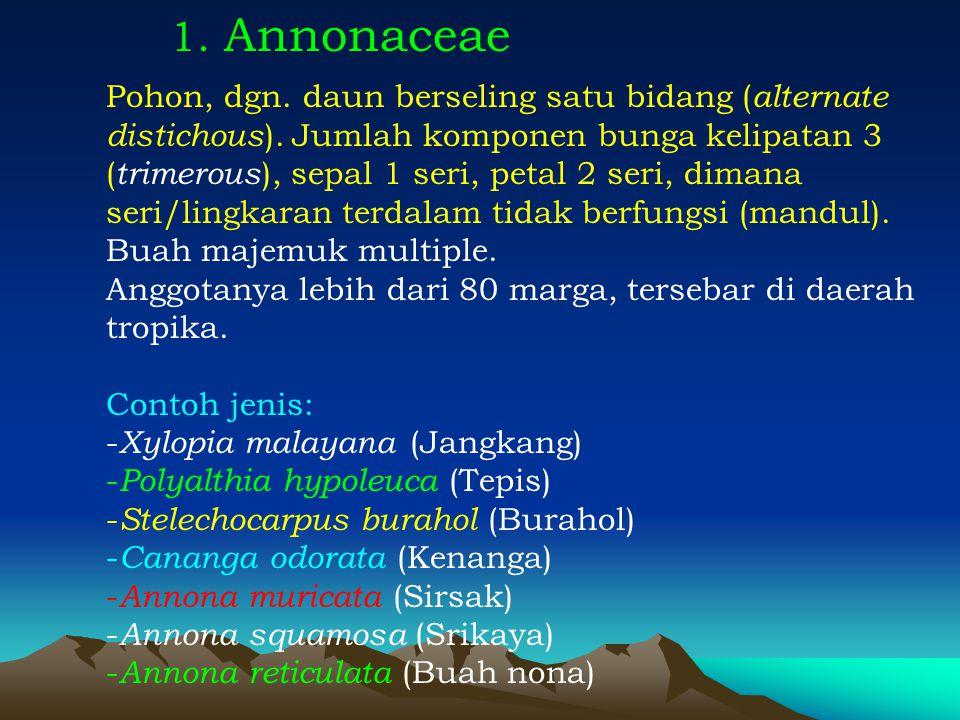 1. Annonaceae Pohon, dgn. daun berseling satu bidang ( alternate distichous ). Jumlah komponen bunga kelipatan 3 ( trimerous ), sepal 1 seri, petal 2