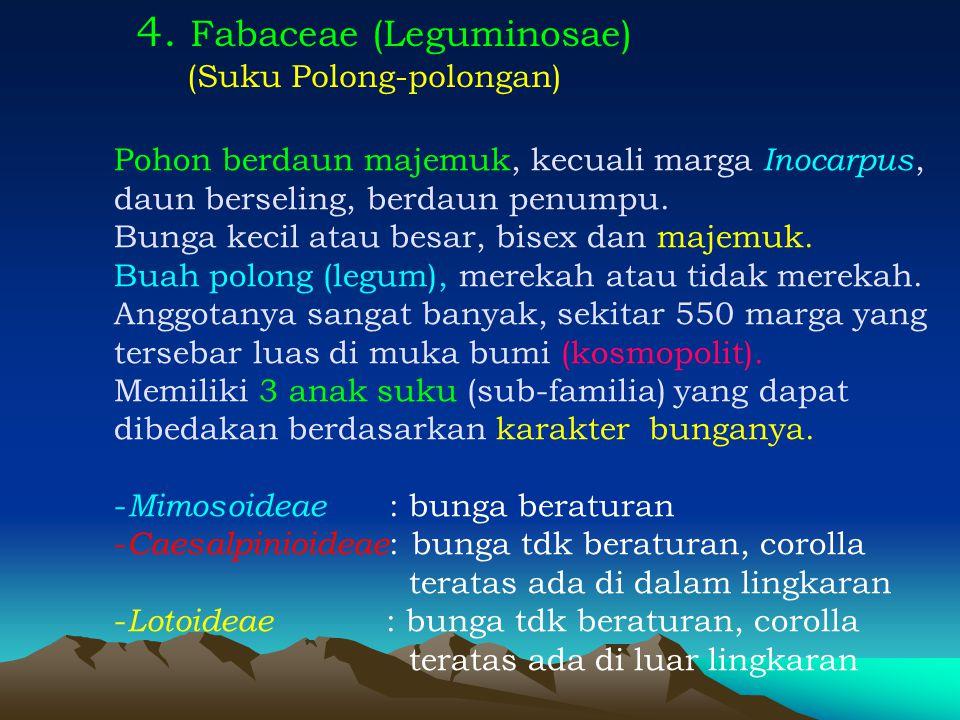 4. Fabaceae (Leguminosae) (Suku Polong-polongan) Pohon berdaun majemuk, kecuali marga Inocarpus, daun berseling, berdaun penumpu. Bunga kecil atau bes