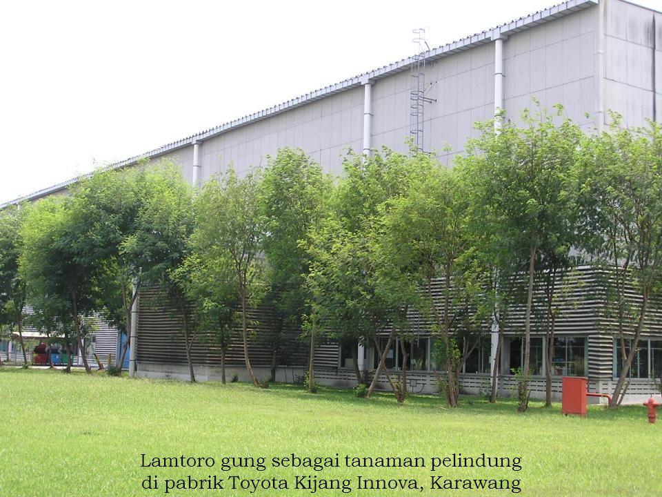 Lamtoro gung sebagai tanaman pelindung di pabrik Toyota Kijang Innova, Karawang