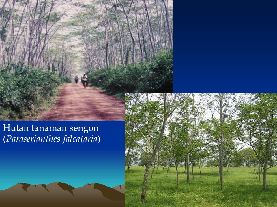 Hutan tanaman sengon ( Paraserianthes falcataria )