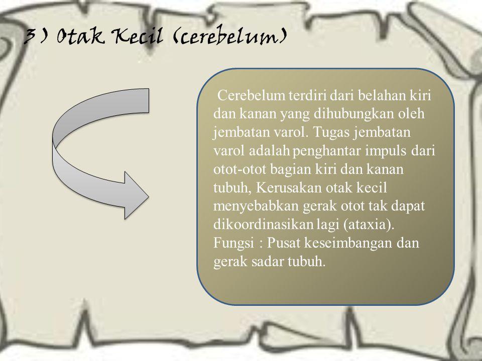 3 ) Otak Kecil (cerebelum) Cerebelum terdiri dari belahan kiri dan kanan yang dihubungkan oleh jembatan varol. Tugas jembatan varol adalah penghantar