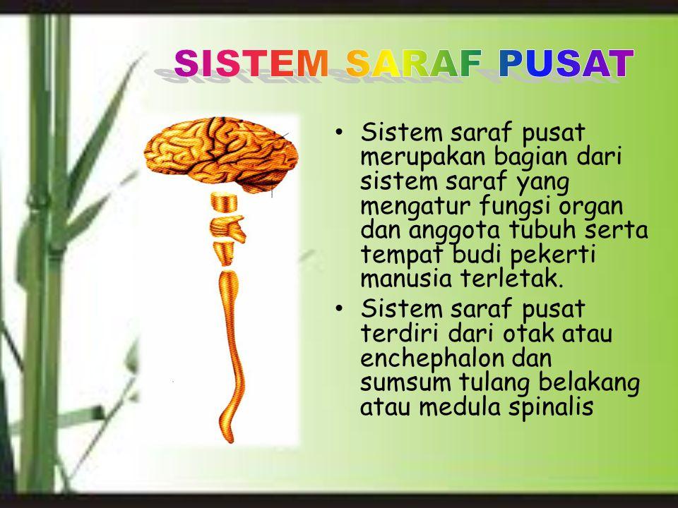 Sistem saraf pusat merupakan bagian dari sistem saraf yang mengatur fungsi organ dan anggota tubuh serta tempat budi pekerti manusia terletak. Sistem