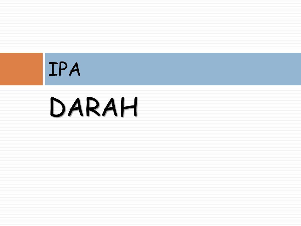 DARAH IPA