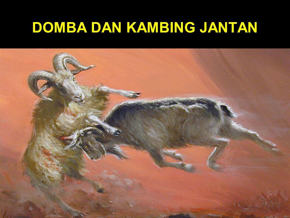 DOMBA DAN KAMBING JANTAN