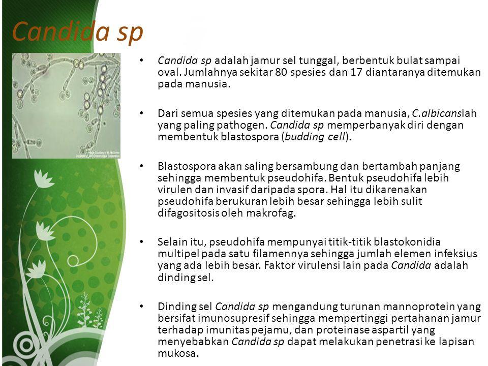 Candida sp Candida sp adalah jamur sel tunggal, berbentuk bulat sampai oval.