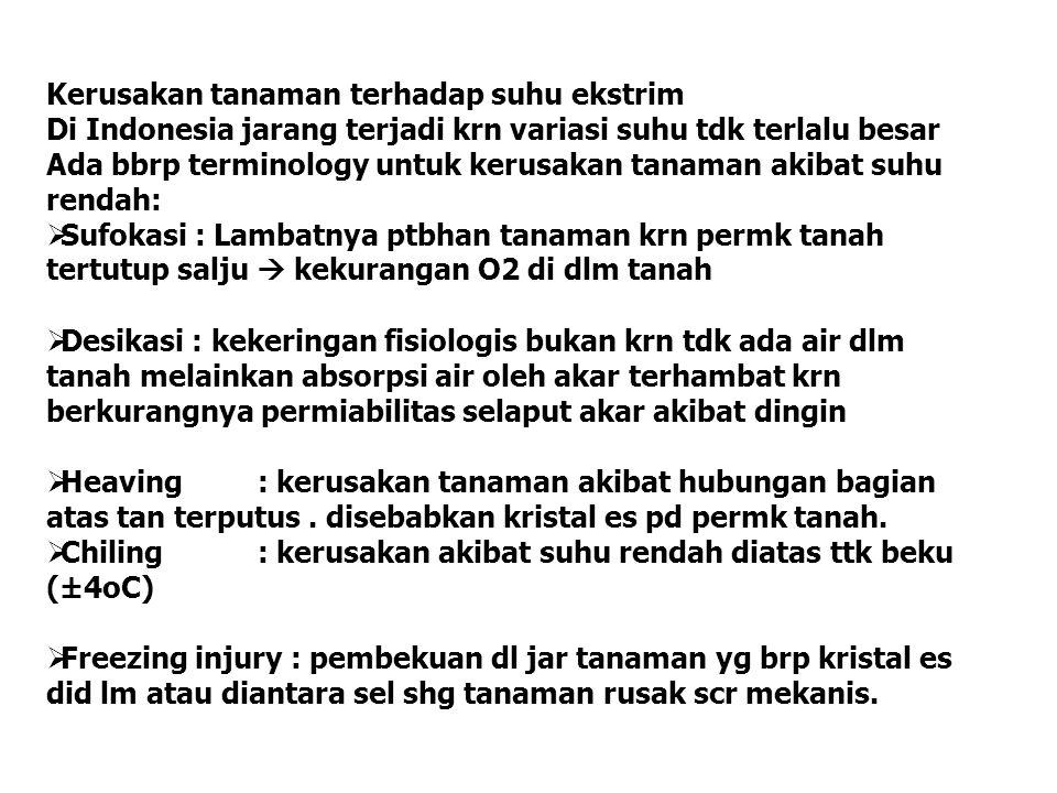 Kerusakan tanaman terhadap suhu ekstrim Di Indonesia jarang terjadi krn variasi suhu tdk terlalu besar Ada bbrp terminology untuk kerusakan tanaman ak