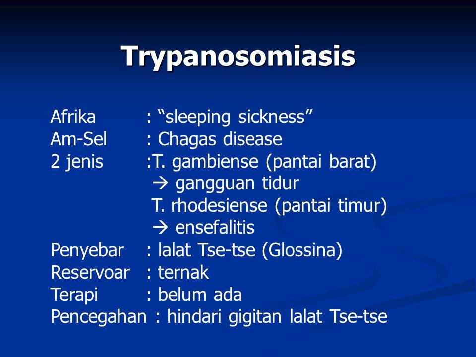 Trypanosomiasis Afrika : sleeping sickness Am-Sel : Chagas disease 2 jenis :T.