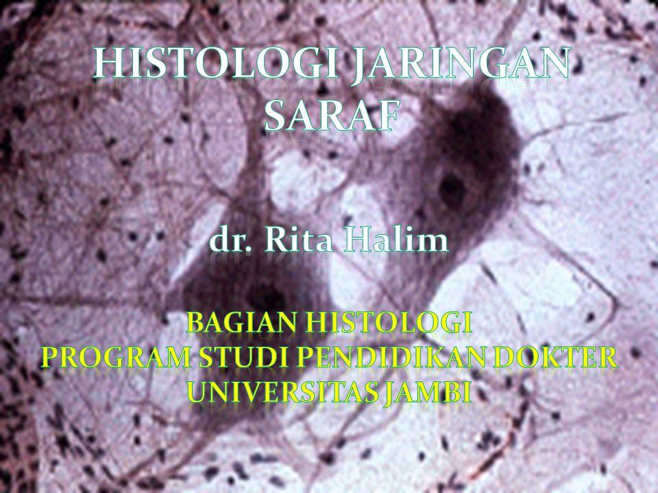 …neuron Komponen utama: Perikarion/ badan sel/ soma Sitoplasma Badan nissl nukleus Processus Axon dendrit
