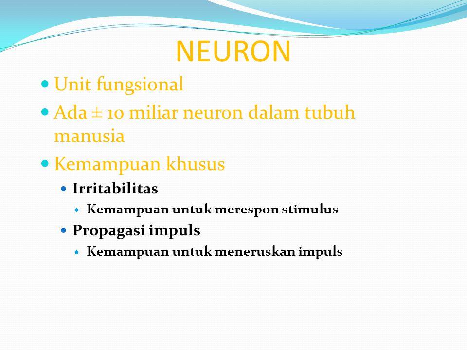 NEURON Unit fungsional Ada ± 10 miliar neuron dalam tubuh manusia Kemampuan khusus Irritabilitas Kemampuan untuk merespon stimulus Propagasi impuls Ke