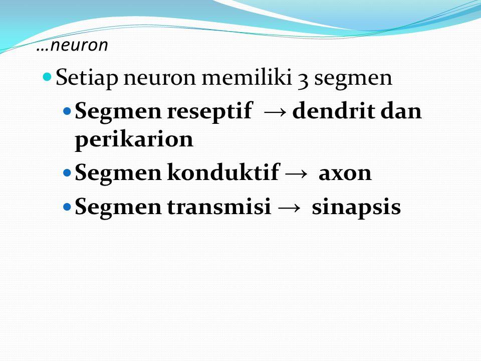 …neuron Setiap neuron memiliki 3 segmen Segmen reseptif → dendrit dan perikarion Segmen konduktif → axon Segmen transmisi → sinapsis