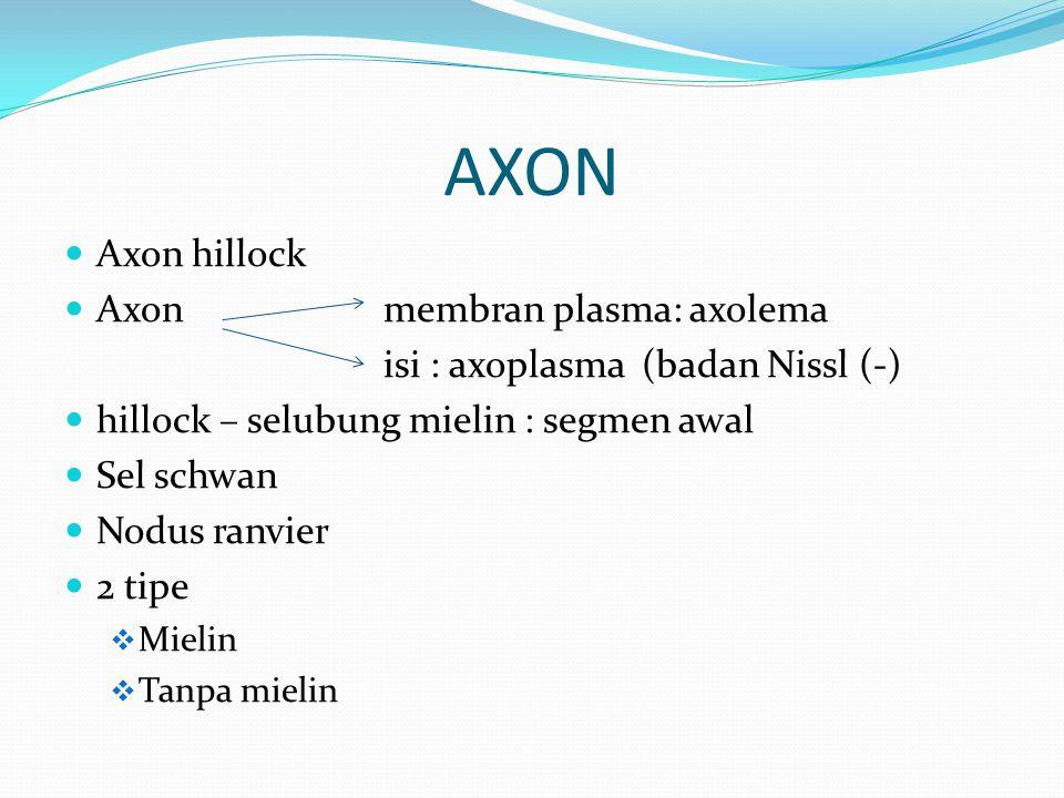 Axon hillock Axon membran plasma: axolema isi : axoplasma (badan Nissl (-) hillock – selubung mielin : segmen awal Sel schwan Nodus ranvier 2 tipe  M