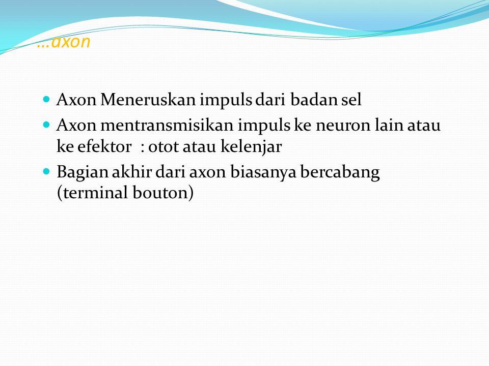 …axon Axon Meneruskan impuls dari badan sel Axon mentransmisikan impuls ke neuron lain atau ke efektor : otot atau kelenjar Bagian akhir dari axon bia