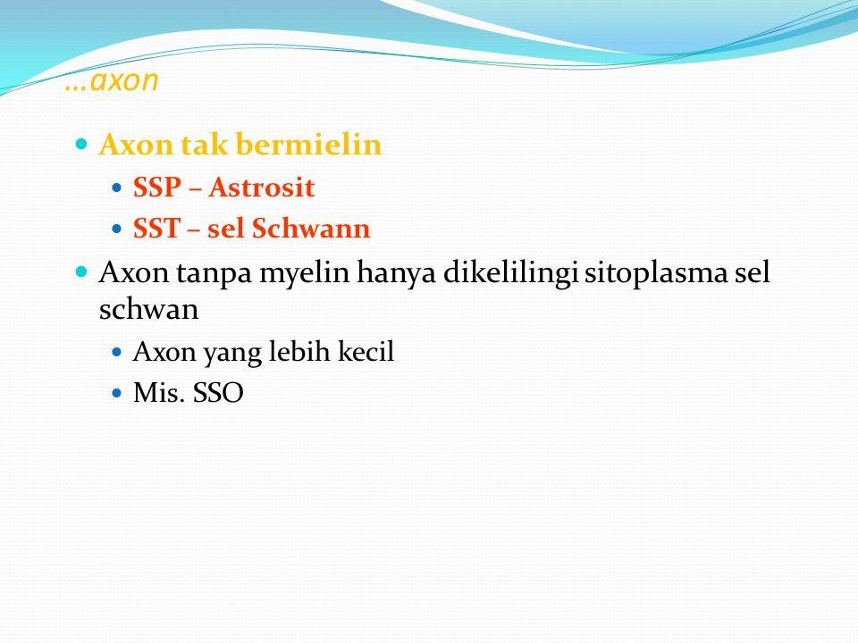 …axon Axon tak bermielin SSP – Astrosit SST – sel Schwann Axon tanpa myelin hanya dikelilingi sitoplasma sel schwan Axon yang lebih kecil Mis. SSO