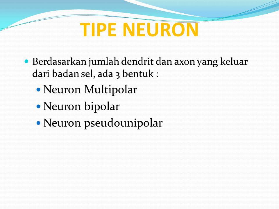 TIPE NEURON Berdasarkan jumlah dendrit dan axon yang keluar dari badan sel, ada 3 bentuk : Neuron Multipolar Neuron bipolar Neuron pseudounipolar