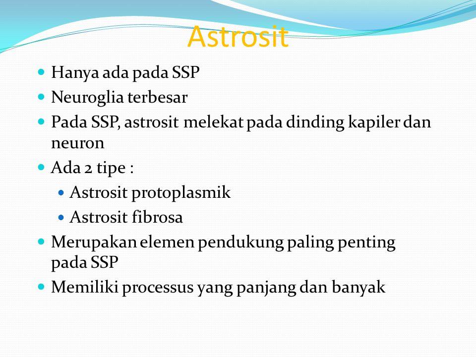 Astrosit Hanya ada pada SSP Neuroglia terbesar Pada SSP, astrosit melekat pada dinding kapiler dan neuron Ada 2 tipe : Astrosit protoplasmik Astrosit