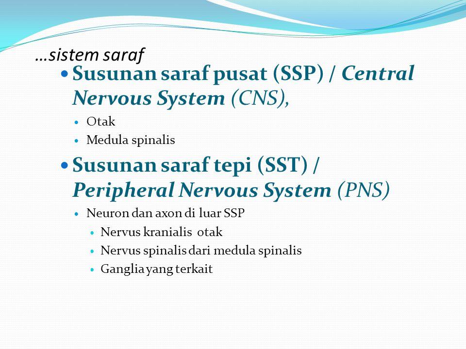 …sistem saraf Susunan saraf pusat (SSP) / Central Nervous System (CNS), Otak Medula spinalis Susunan saraf tepi (SST) / Peripheral Nervous System (PNS