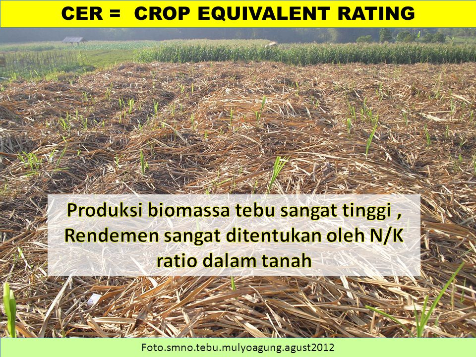 CER = CROP EQUIVALENT RATING Foto.smno.tebu.mulyoagung.agust2012