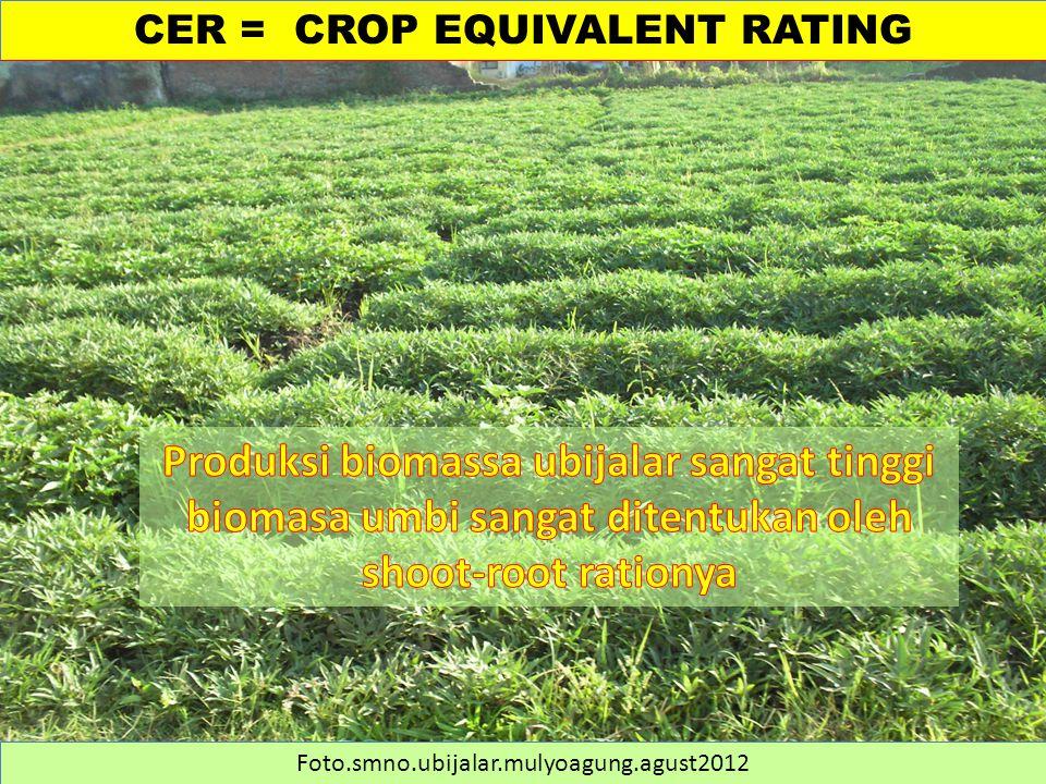 CER = CROP EQUIVALENT RATING Foto.smno.ubijalar.mulyoagung.agust2012